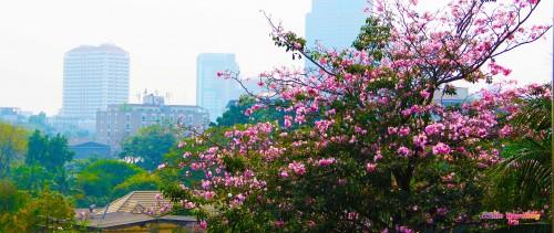 Bangkok'taki güzel çiçekler