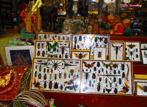 Bugs as souvenirs, Bangkok