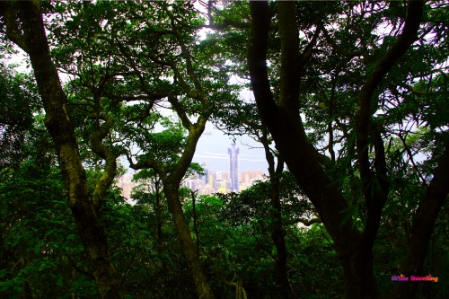 City view through the trees in Victoria Trail, Hongkong