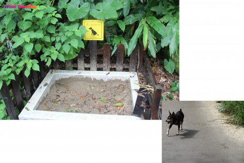 Convenient for dogs, Victoria Trail, Hongkong