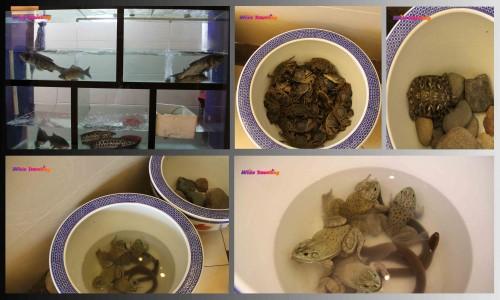 Xinchang'daki restorant çıkışındaki canlılar