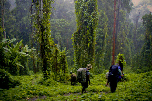 Kokoda Track, Photo Credit: mymilez