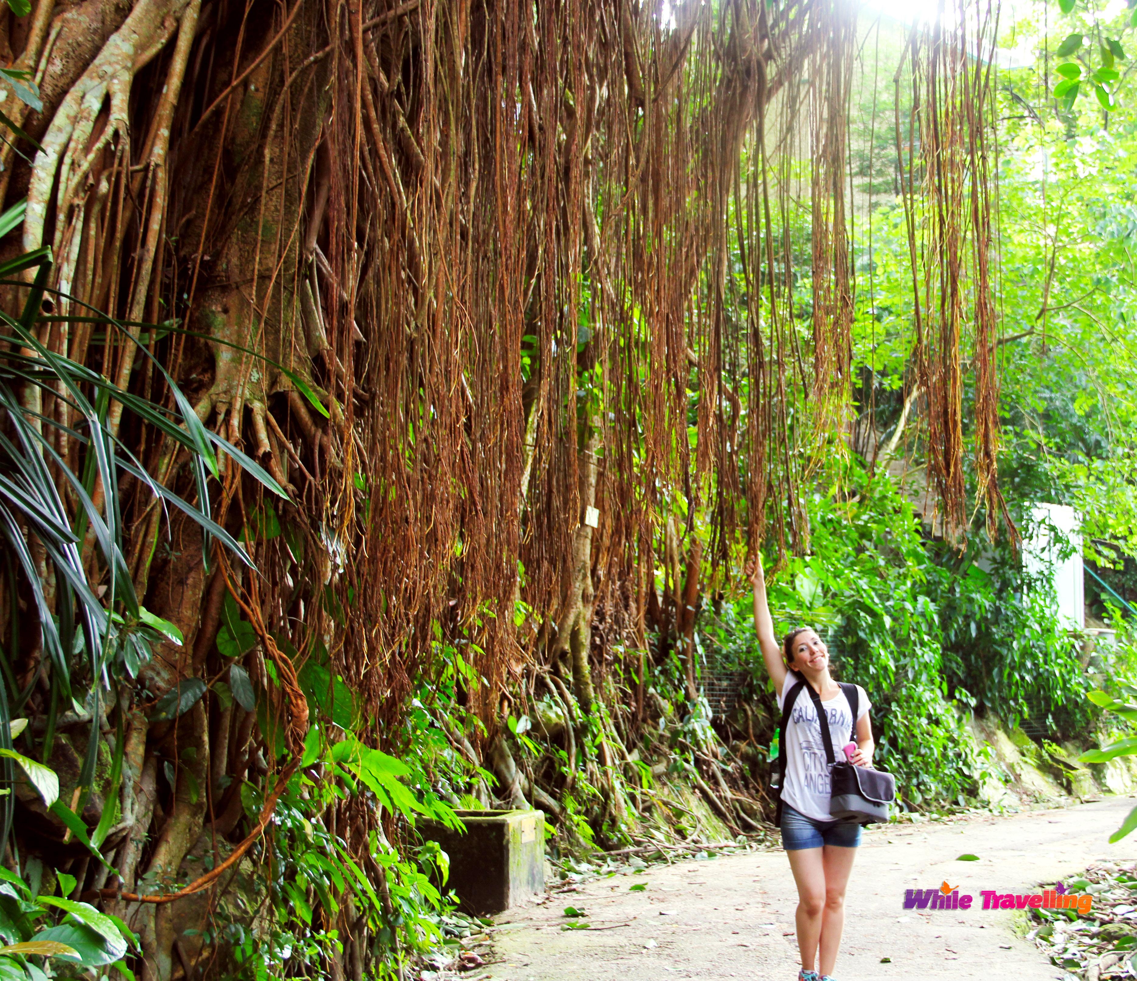 Amazing Hong Kong: Hiking In Amazing Victoria Trail(The Peak Trail) In Hong